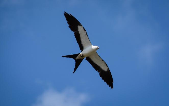 ST Kite